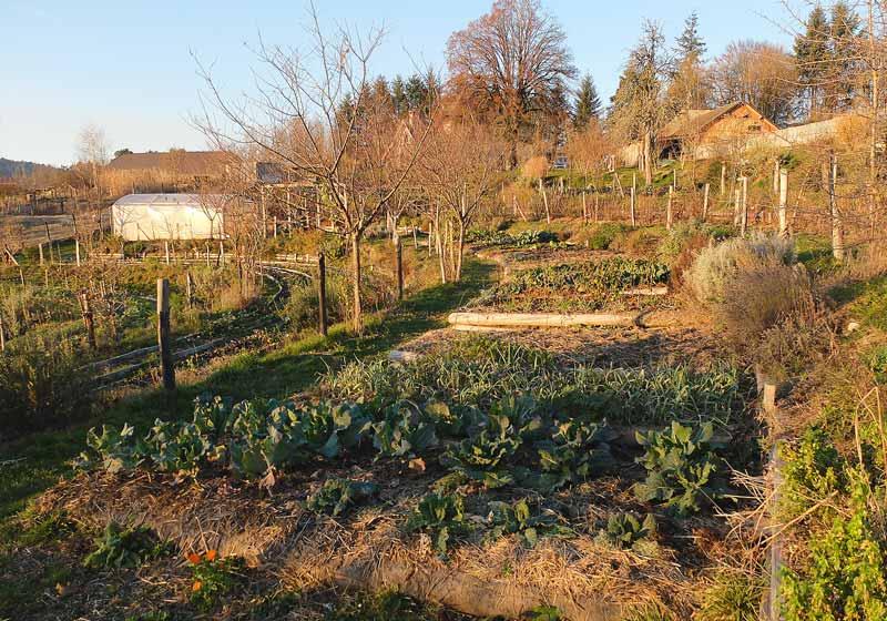 Jardin Permaculture Battement d'Ailes