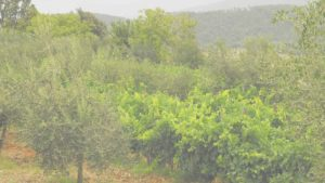 Biodiversité Blanc FW 2