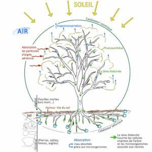 Environnement de l'arbre