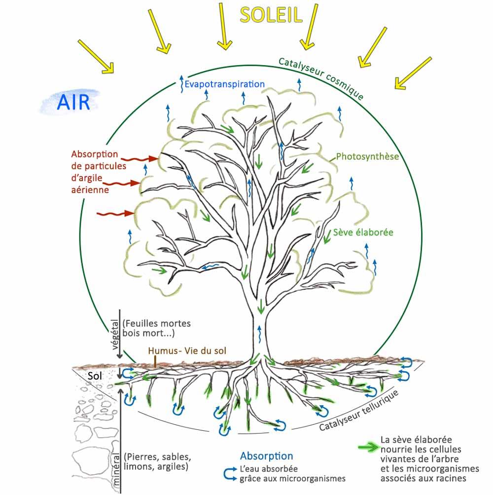 Energies Terre et Ciel